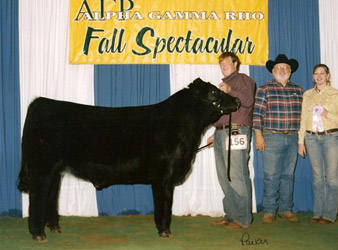 Reserve Champion Limousin Steer